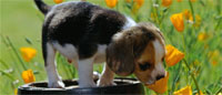 Photo of a puppy smelling flowers